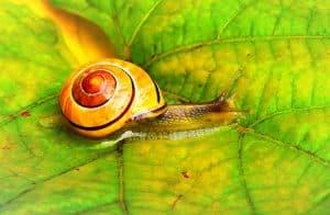 Snail Farm opinie