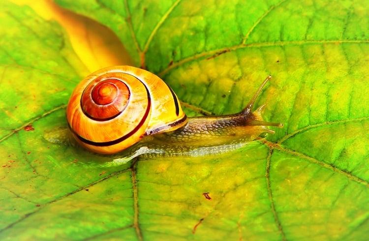 Snail Farm – składniki, komentarze, opinie, cena